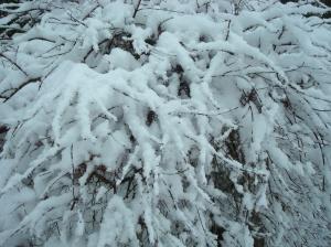first-snow1